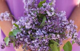 (Français) Petits bouquets