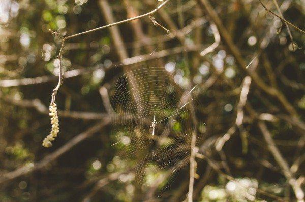 Bastien-Constance-Nature-Web (13)