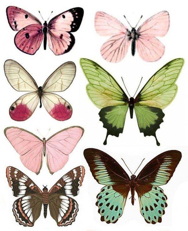 Butterfly-(4)