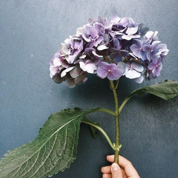 Fleurs (7)
