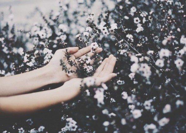 Fleurs (9)
