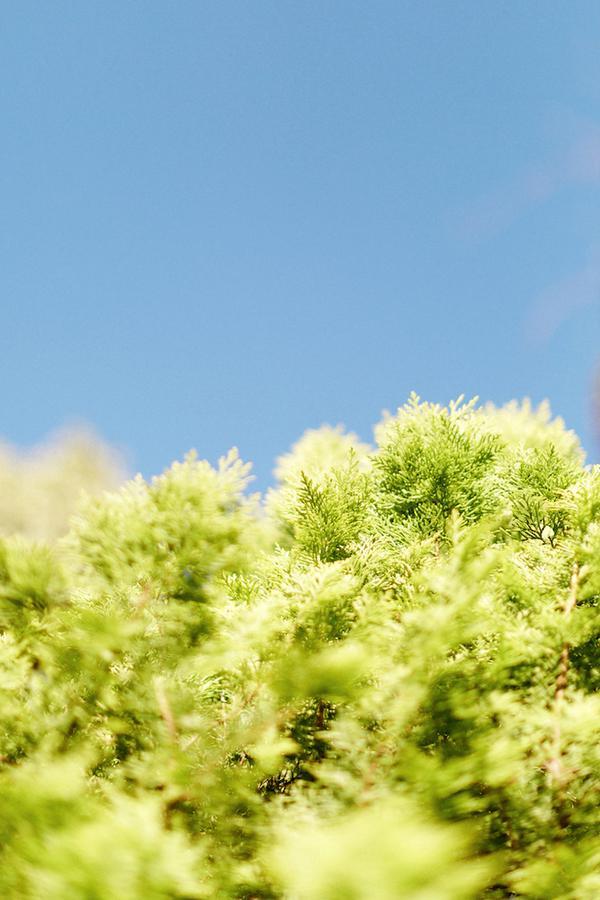 Focus-photographe-Remi-Dupac10